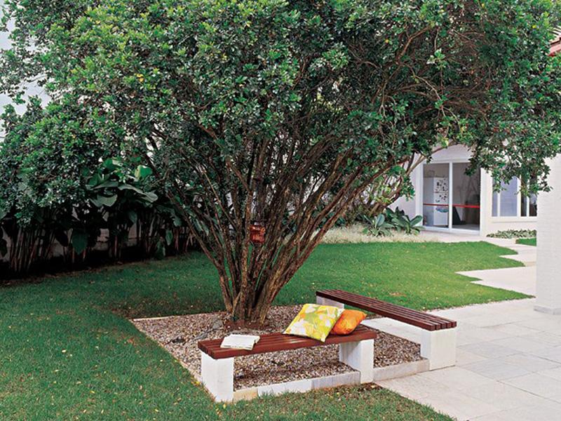 Árvores que parecem esculturas vivas